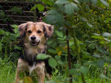 Dienstleistung: Hundebetreuung