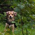 Dienstleistung: Hundebetreuung Graz