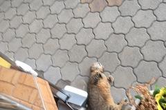Dienstleistung: Tiersitter Graz & Umgebung