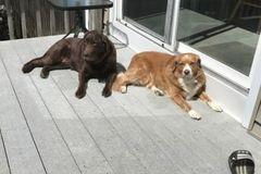 Free Consultation: Dog Walking/ Pet Care - Deer Park, NY