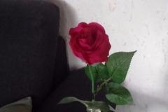 Ilmoitus: 20kpl fuksianvärisiä ruusuja