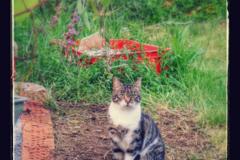 Dienstleistung: Katzenbetreuung (ca. 30 Minuten) in Graz & Umgebung