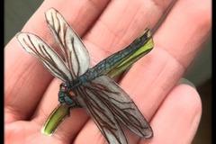 Vente au détail: broche libellule