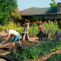 Experiences: How to Start and Grow a Community Garden
