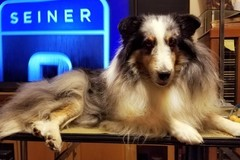 Request Quote: D&D Low Cost Grooming and Training - Ogden, UT