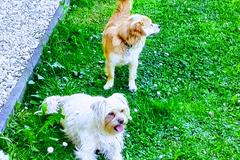 Urlaubsbetreuung: Hunde Urlaubsbetreuung in der Steiermark