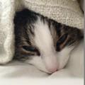 Dienstleistung: Katzensitter in Mondsee & Stadt Salzburg