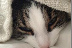 Dienstleistung: Katzenbetreuung (ca. 45 Minuten) in Mondsee & Stadt Salzburg