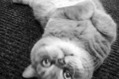 Dienstleistung: Katzenbetreuung Trofaiach & Leoben