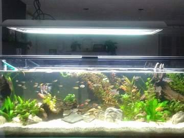 Dienstleistung: Reinigung Ihres Süsswasseraquariums in Trofaiach & Leoben