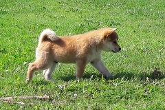 Tarjotaan: socialize puppy with other puppies