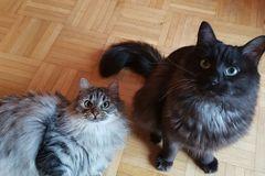 Dienstleistung: Katzenbetreuung (ca 30 Minuten) in Hallein und Salzburg