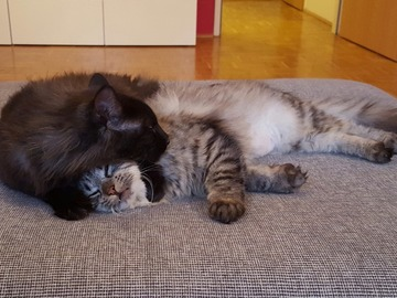 Dienstleistung: Tiersitter Hallein & Salzburg