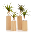 Products: Air Plant Stand Set