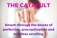 Services: The Catapult - Signature Programme