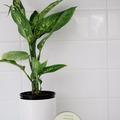 Products: Soft Scrub