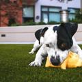 Dienstleistung: Tiercoaching Graz: Welpenpaket