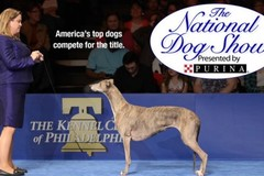 Request Pricing: The National Dog Show 2017