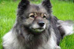 Dienstleistung: Mobile Hundebetreuung Graz (ca. 4 Stunden)