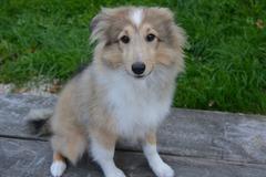 Dienstleistung: Mobile Hundebetreuung Graz (ca. 5 Stunden)
