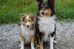 Dienstleistung: Mobile Hundebetreuung Graz (4 Std.)
