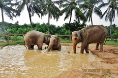 Book Online: Elephants Day Out – Celebrating Love and Freedom By Rajith B