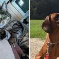 Dienstleistung: Haustierbetreuung (ca. 75 Minuten) Katze + Hund