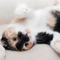 Dienstleistung: SEMINAR: Die Körpersprache der Katze (Teil 1)