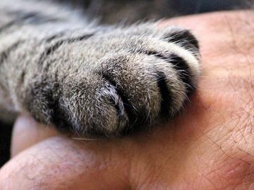 Dienstleistung: SEMINAR: Die Körpersprache der Katze (Teil 1) a.f. PARTNER