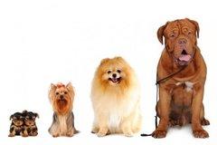 Dienstleistung: 5er Block Mobile Hundebetreuung