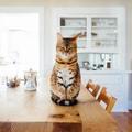 Dienstleistung: Katzensitter exkl. für wöchentliche Dauerkunden