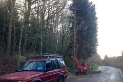 Daily Equipment Rental: Timberwolf wood chipper 125