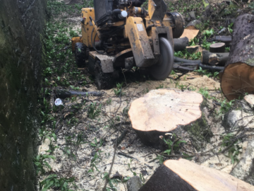 Hourly Equipment Rental: Stump grinder