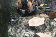 Hourly Equipment Rental: Stump grinder