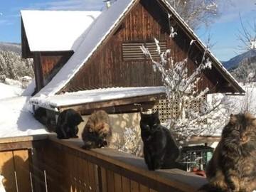 Dienstleistung: Tiersitter Graz