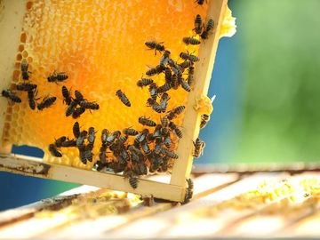 Coaching Session: Beekeeping for Beginners