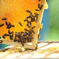 Coaching Session: Beekeeping for Beginners Coaching