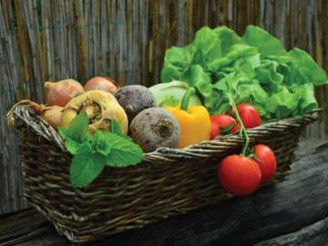 NOS JARDINS A PARTAGER: Cherche jardin à louer au mois - 06
