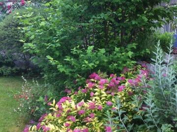 NOS JARDINS A LOUER: Un jardin a Asnières sur Seine, à l'abri des regards