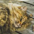 Dienstleistung: Katzensitter Graz