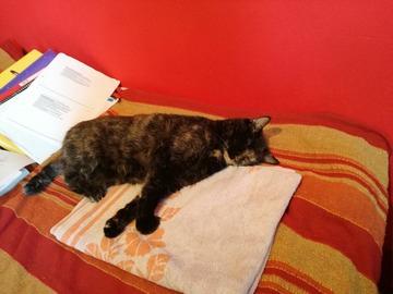 Dienstleistung: Katzensitter in Salzburg Stadt