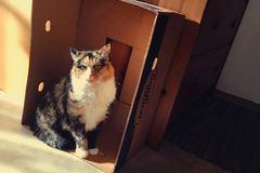 Dienstleistung: Tiersitter Hallein und Umgebung