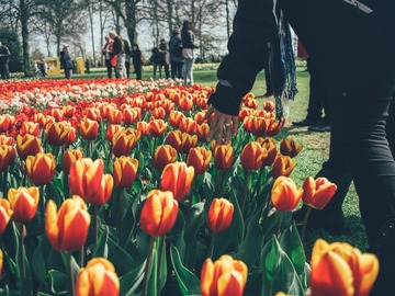 Offering: Gay Amsterdam and Tulip Fields in Bloom with Mario