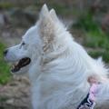 Dienstleistung: Tierbetreuung Graz - Umgebung