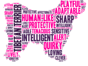Selling: Tibetan Terrier - Word Cloud