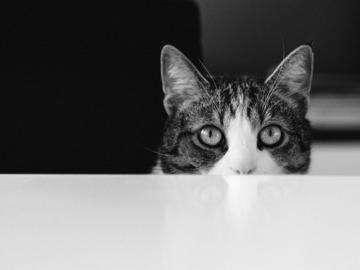 Dienstleistung: Alles für die Katz! - Betreuung: Graz