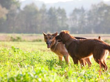 Urlaubsbetreuung: Hundstage in Graz