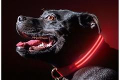 Single Item: Light Up Dog Safety Collar by Poochlight - Free 1 Day Ship!