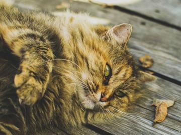 Urlaubsbetreuung: Urlaubsbetreuung für Katzen Linz