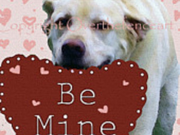 Selling: Funny Labrador Art Greeting Card